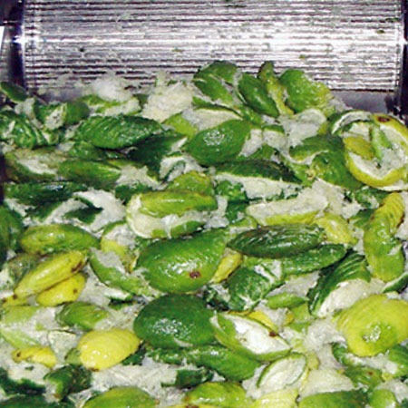 Convient à toutes les tailles d'agrumes (orange, citron, kumquat et pamplemousse).