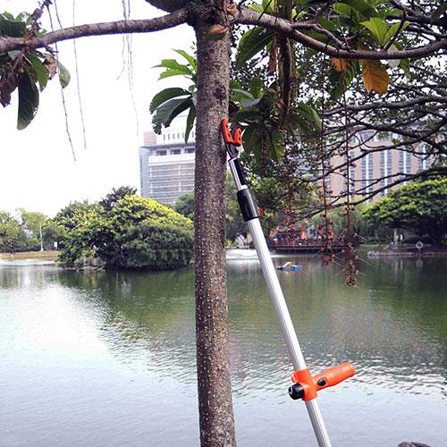 Træbeskærer skærer høje grene