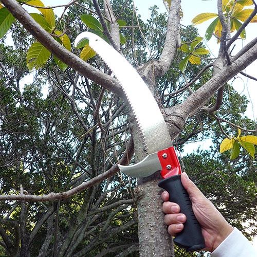 Serra para poda de árvores altas