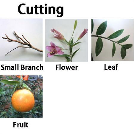 Podadora de árboles Soteck para cortar frutas, flores, ramas
