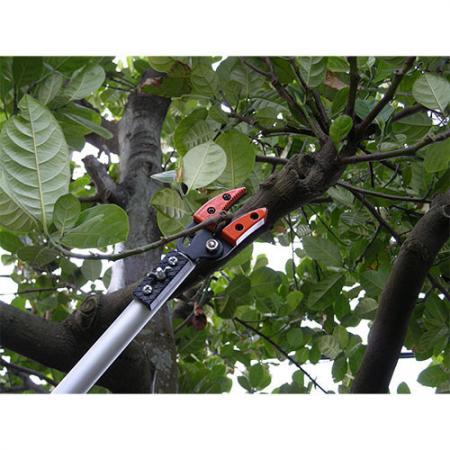 Podadora de árboles de largo alcance y longitud fija Soteck de 60 pulgadas (1500 mm)