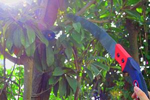 Garden Tools - Pruning Saw