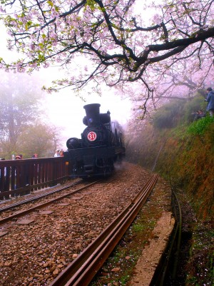 Chiayi Alishan mountain railway.