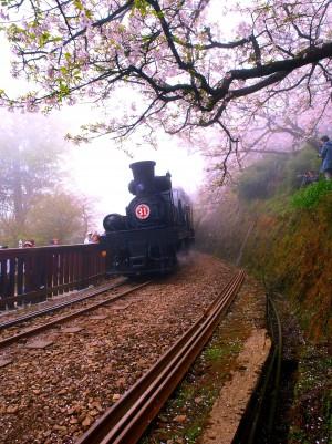 Chiayi Alishan mountain railway.