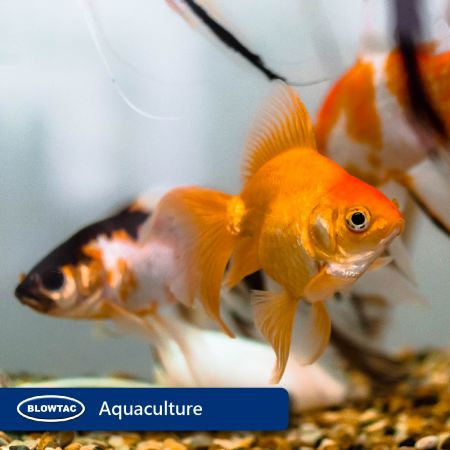 Oxygen supply for fish tanks and ponds.