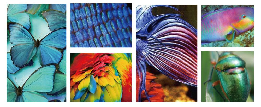 遵循自然奧秘的色彩。