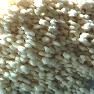 Amoni Nitrat