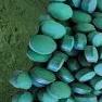 siyanobakteriler