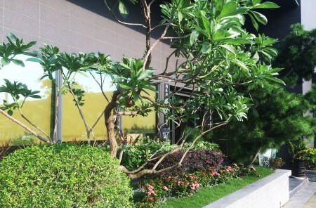 Hong Chiang Technology Industry Co., LTD│ Озеленення заводу компанії