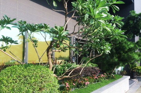 Hong Chiang Technology Industry Co., LTD│Company Plant landscaping
