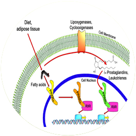 Shown above, Chlorella PPARs are a group of nuclear receptor proteins that function as transcription factors regulating the expression of genes. PPARs play essential roles in the regulation of cellular differentiation, development, and metabolism (carbohydrate, lipid, and protein) of higher organisms.