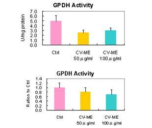 Anti-obesitas: experiment met muizen - Chlorella kan de vetophoping als gevolg van een vetrijk dieet verminderen
