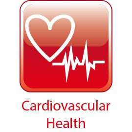 Herz-Kreislauf-Gesundheit - Ergänzung zur Herzunterstützung