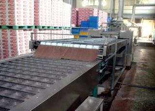 (8) Cutting & Seasoning Machine