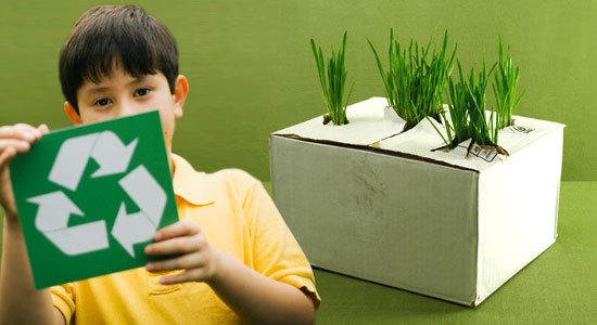 Recycling - grass growing from cardboard box
