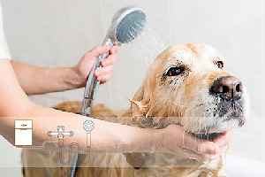 Ozone Shower for Pets
