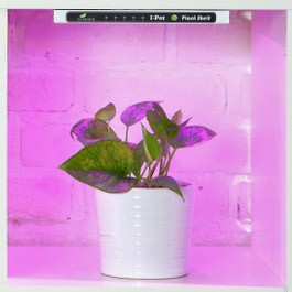 Plant Shelf - led growth light for indoor gardening