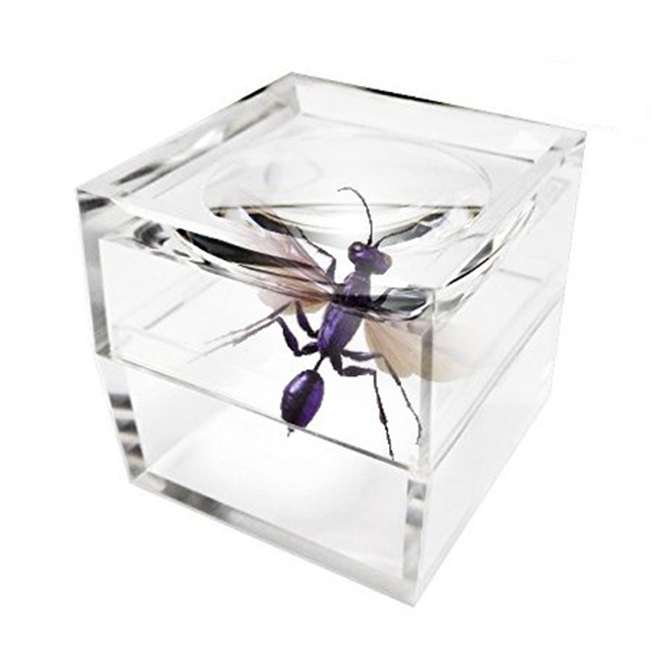Bug viewer for kids