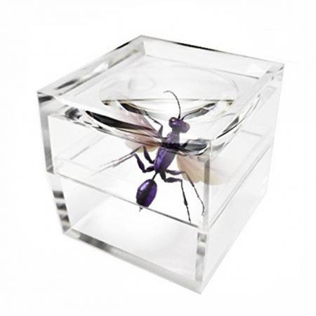 Bug Viewer / Magnifying Cup - Bug viewer for kids