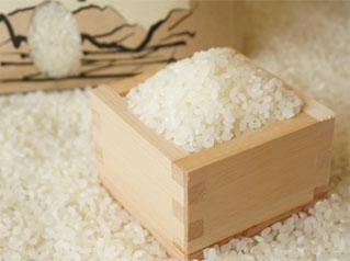 Indonesia Food - Rice