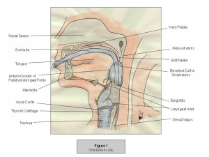 Intubationsposition