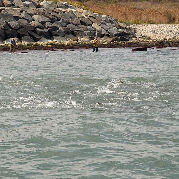 varas para Surfcasting
