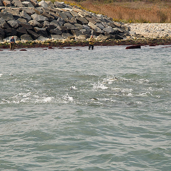 Cañas para surfcasting