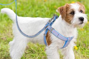 Premium Dog Harness