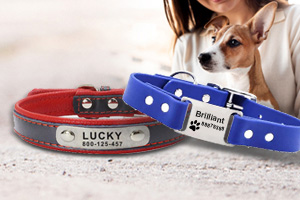 Unique Dog Collar Nameplate