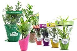 Lieferant von Blumenhüllen für Topfpflanzen