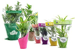 Supplier of Potted Plant Flower Sleeves