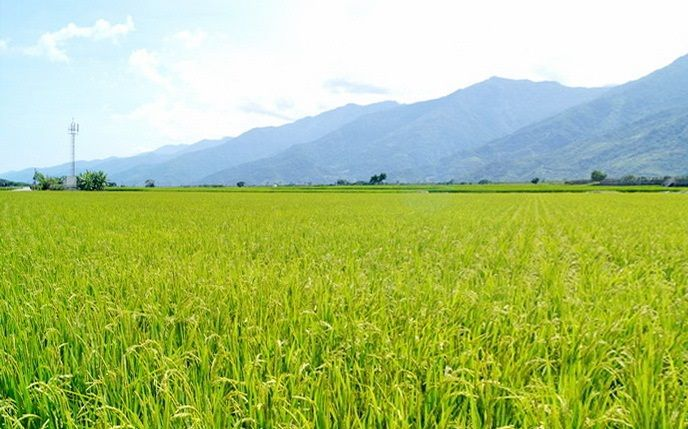 photo of rice fleld in Taiwan. Chun Yu Plastic is located in a main rice production county in Taiwan and delicated to protect our mother land.