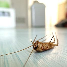 Pest Killer - Pest Killer