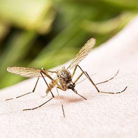 Repelente de mosquitos / pragas - testador farmacêutico
