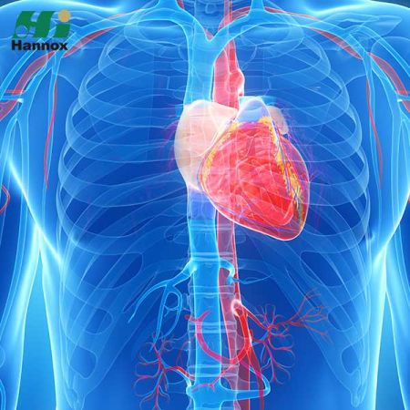 Cardiovascular & Metabolism Products