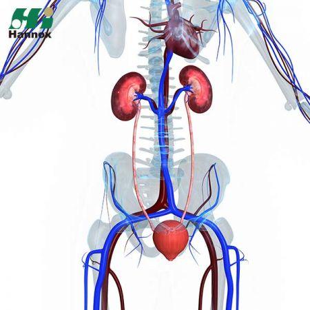 Nephrology Products - Nephrology