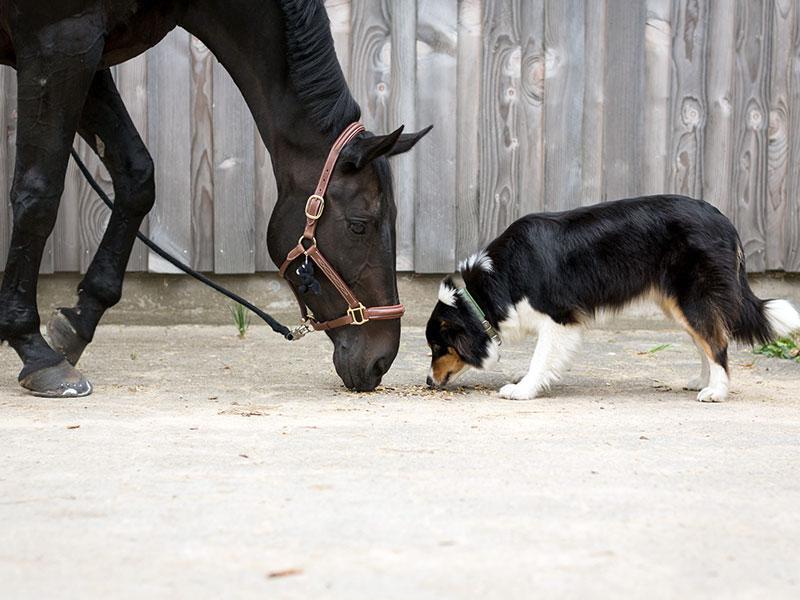 Il produttore di articoli per cavalli e accessori per animali domestici.