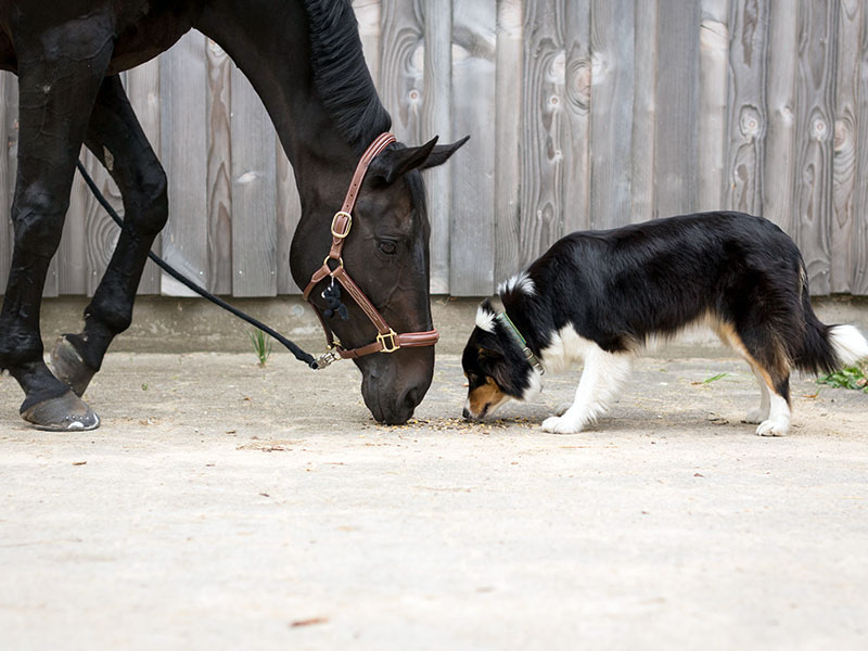 The manufacturer of Horseware & pet accessories product.