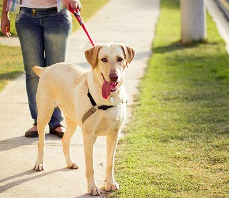 Textile accessories for pet leash.