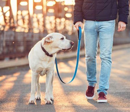 애완 동물 리드 라인이있는 애완 동물 가죽 끈