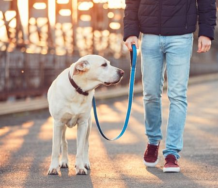 Pet leash with pet lead line