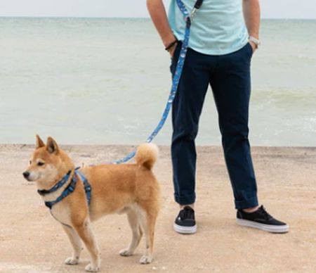 Pet leash with pet lead line and pet harness