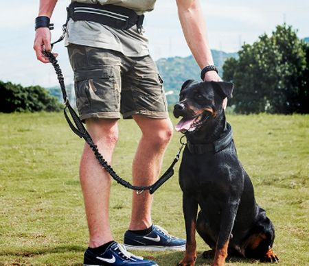 Correa para mascotas con línea de plomo para mascotas y arnés para mascotas