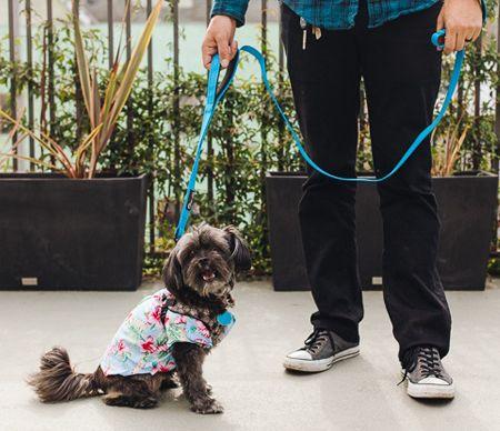 Laisse pour animaux de compagnie avec laisse et harnais pour animaux de compagnie