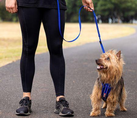 Dây xích cho thú cưng với dây dắt thú cưng và dây nịt cho thú cưng