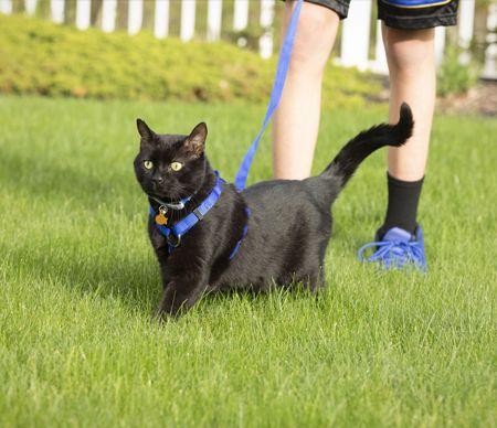 애완 동물 리드 라인과 애완 동물 하네스가있는 애완 동물 가죽 끈