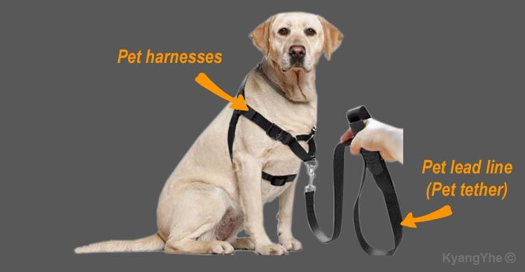 Pet Leash Distribution