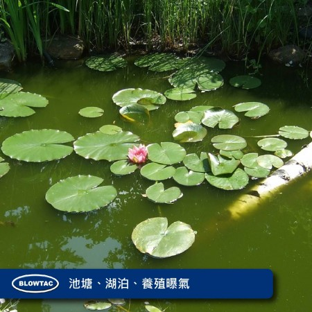 池、湖沼、繁殖用エアレーション